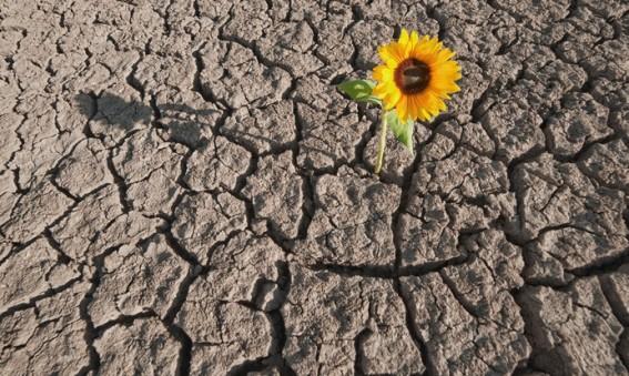 A Rodrigo 1-Resiliencia-